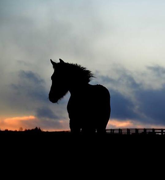Theo at dawn